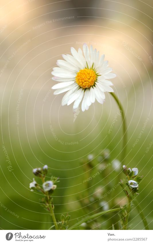 daisies Nature Plant Autumn Flower Grass Blossom Garden Meadow Small Green White Colour photo Multicoloured Exterior shot Close-up Macro (Extreme close-up)