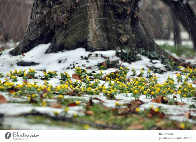 Nature Beautiful Tree Plant Winter Yellow Meadow Snow Environment Landscape Garden Park Ice Earth Frost Blossoming
