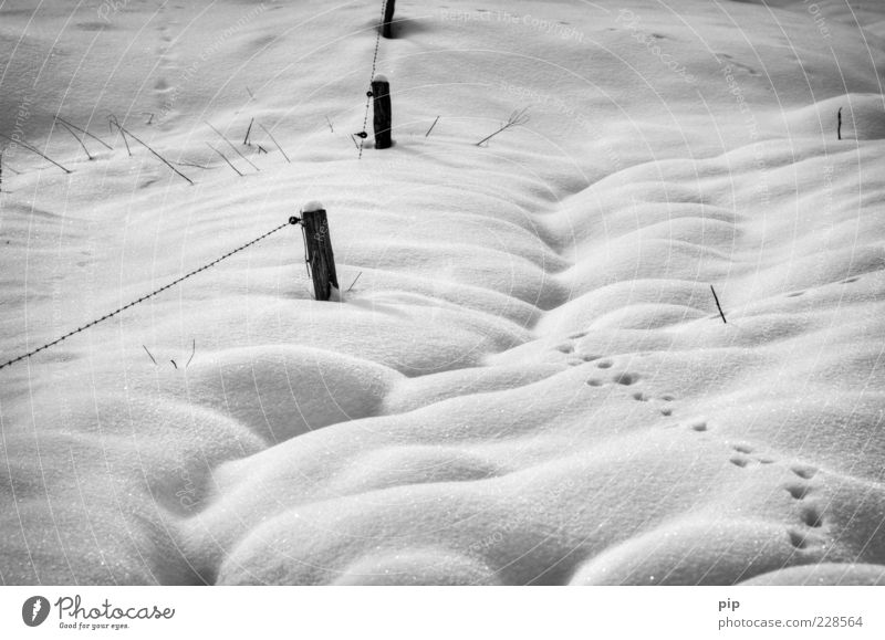 tracked Nature Winter Climate Ice Frost Snow Free Cold Wild Tracks Snow layer Soft Fence Fence post Black & white photo Exterior shot Detail Deserted Contrast