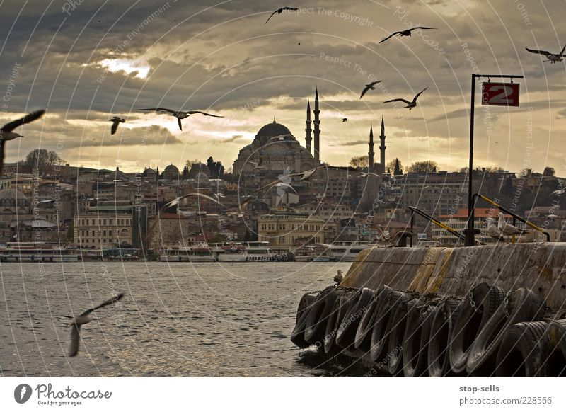 Constantine 0111 Istanbul Port City Downtown Old town Skyline Populated House (Residential Structure) Building Animal Wild animal Bird Group of animals Flying