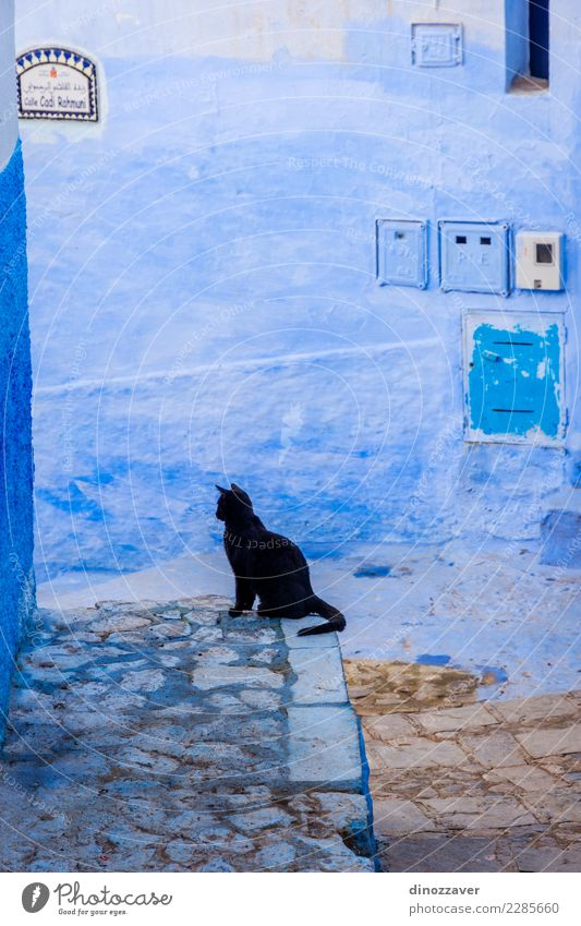Black cat in blue town, Chefchaouen Cat Old Blue Town Colour House (Residential Structure) Street Architecture Building Stairs Sit Culture Village Tradition