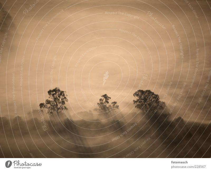 Nature Tree Plant Relaxation Environment Landscape Gray Air Weather Field Fog Flying Discover Treetop Haze Aerial photograph
