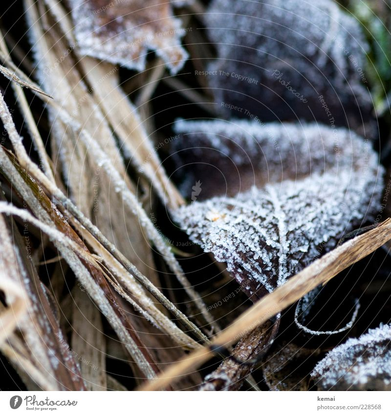 Back to Frost Environment Nature Plant Winter Ice Grass Leaf Cold Frozen Ice crystal Rachis Colour photo Subdued colour Exterior shot Close-up Detail Day