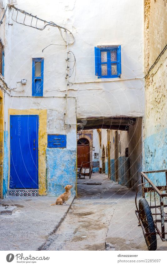 Puppy at the street, Essaouira Vacation & Travel Tourism House (Residential Structure) Culture Animal Town Building Architecture Street Dog Old Cute Blue Colour