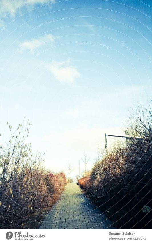 Sky Autumn Landscape Grass Lanes & trails Bright Bushes Sidewalk Footpath Beautiful weather Street sign Clouds in the sky Right ahead Pave Skyward