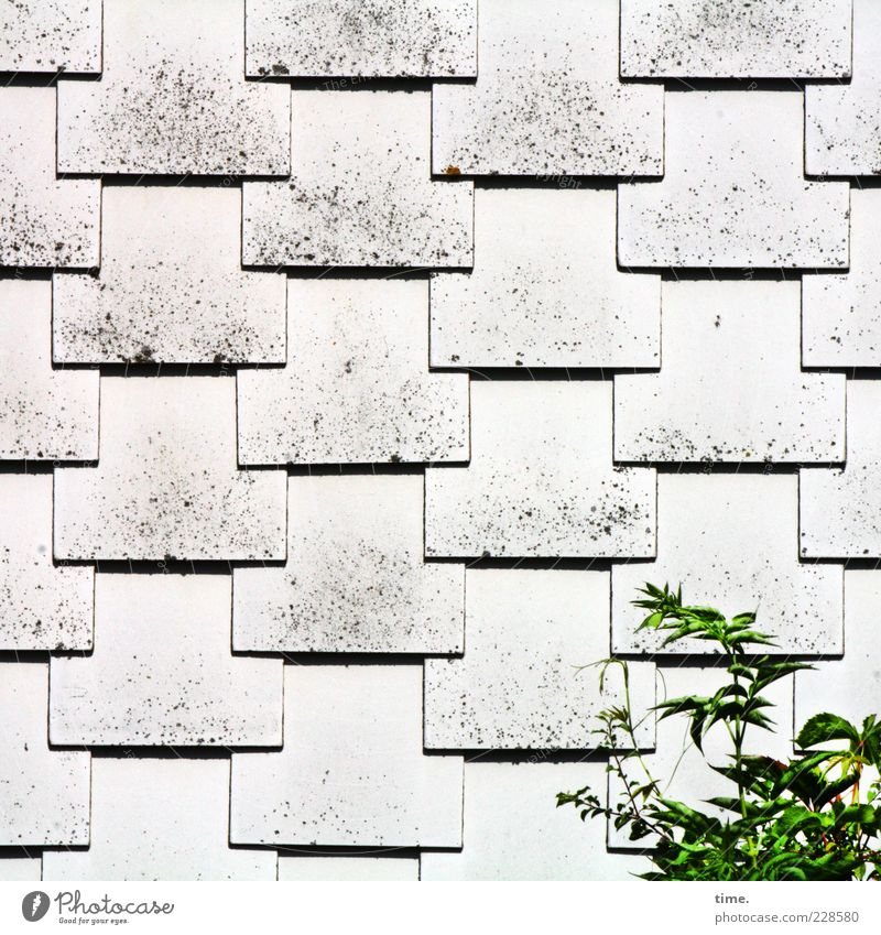 White Green Plant Gray Bright Arrangement Esthetic Growth Safety Roof Protection Parallel Smoothness Converse Equal Roofing tile