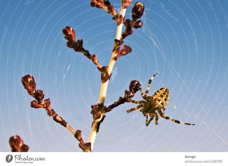 Nature Plant Animal Wild animal Stalk Hang Disgust Spider Spider's web Cross spider