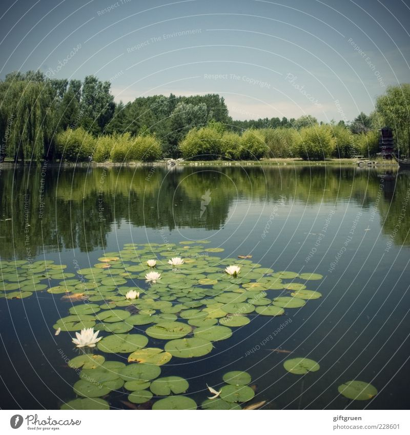 swimming group Environment Nature Landscape Elements Water Sky Summer Beautiful weather Plant Tree Flower Grass Bushes Leaf Blossom Park Meadow Pond Lake