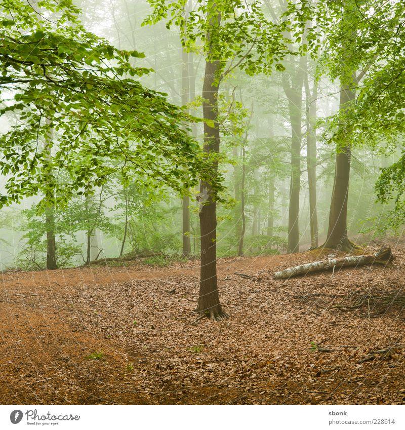 Nature Green Tree Plant Leaf Forest Environment Landscape Fog Natural Haze
