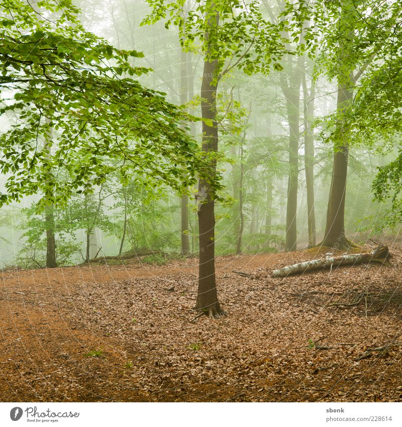 Nature Green Tree Plant Leaf Forest Environment Landscape Fog Natural Haze