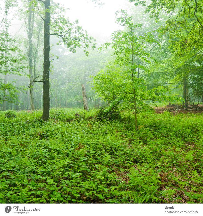 Nature Green Tree Plant Forest Environment Landscape Fog Natural Bushes Virgin forest