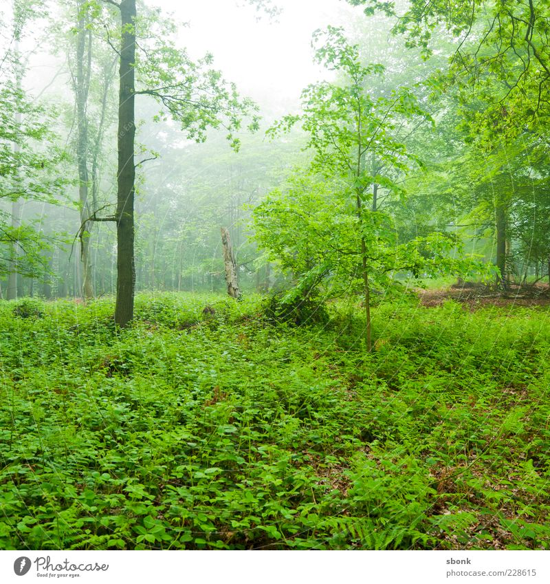 Nature Green Tree Plant Forest Environment Landscape Fog Natural Bushes Virgin forest