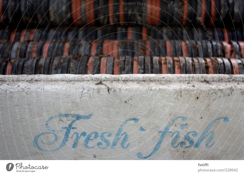 Old Blue White Red Calm Black Time Dirty Fresh Characters Fish Good Plastic Serene Crate Strange