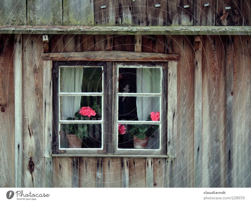 Flowers in the window Pot plant House (Residential Structure) Hut Building Facade Window Old Geranium Wooden house Lattice window Curtain Window pane