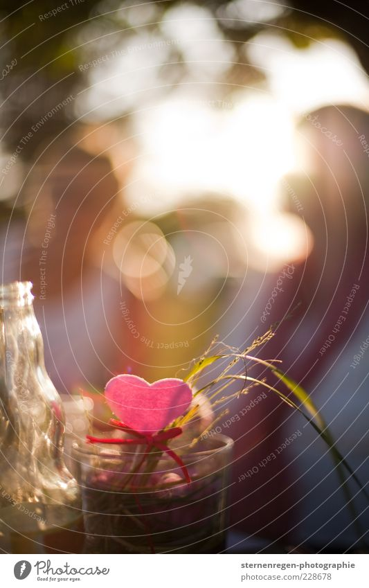 Joy Garden Happy Dream Contentment Glass Heart Pink Glittering Happiness Romance Illuminate Decoration Smiling To enjoy Blade of grass