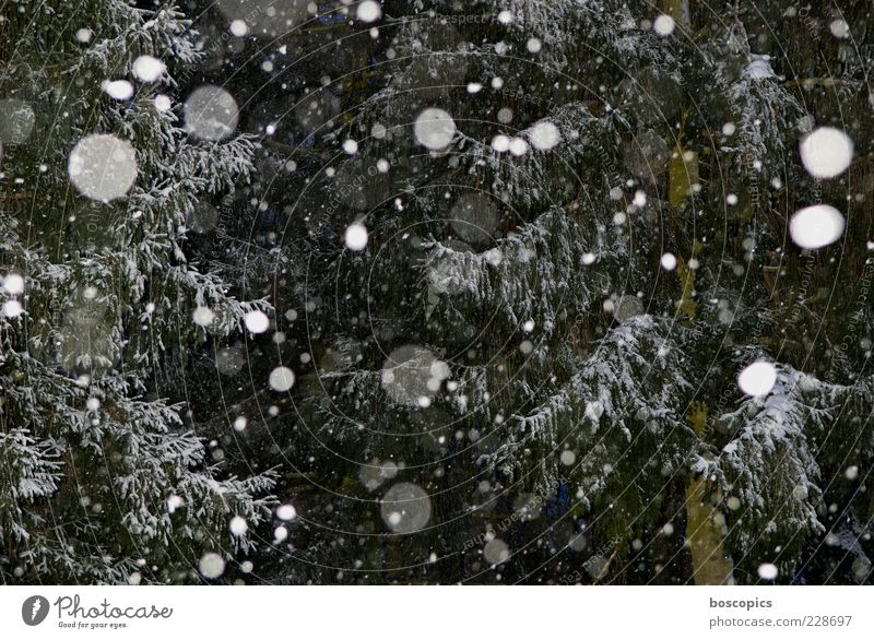 It's snowing Environment Nature Climate Weather Bad weather Snow Snowfall Tree Chaos Colour photo Exterior shot Night Flash photo Central perspective Deserted