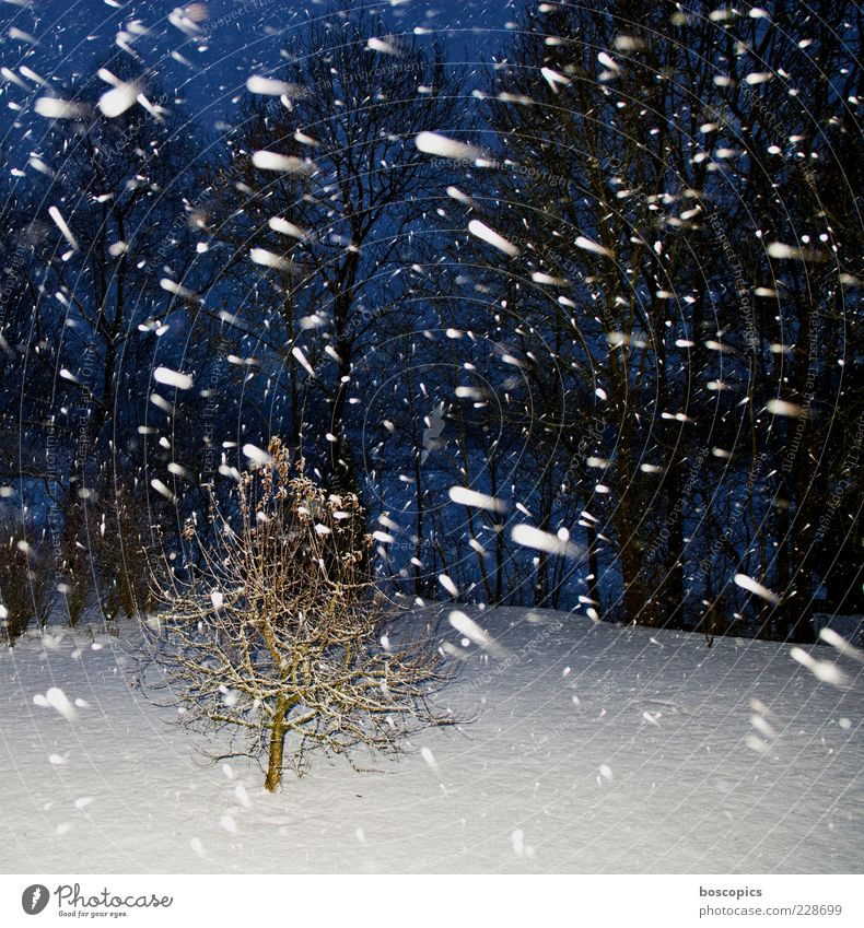 Nature Blue White Tree Winter Cold Snow Snowfall Weather Climate Chaos Bad weather Night shot Night