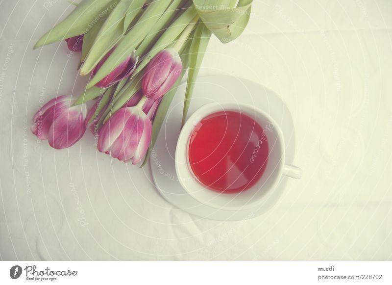 White Plant Flower Lie Beverage Sweet Kitsch Violet Tea Tulip Hot drink Tea cup