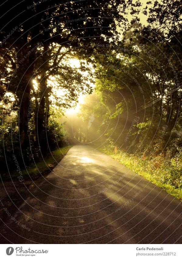 early morning mist Harmonious Relaxation Freedom Summer Nature Landscape Plant Sunlight Climate Fog Tree Forest Street Lanes & trails Illuminate Peaceful Hope