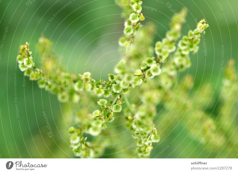 Spermatic cords underneath & over. Nature Plant Bushes Foliage plant Green Verdant Part of the plant Seed Seed plant Many Muddled Under Above Seed head