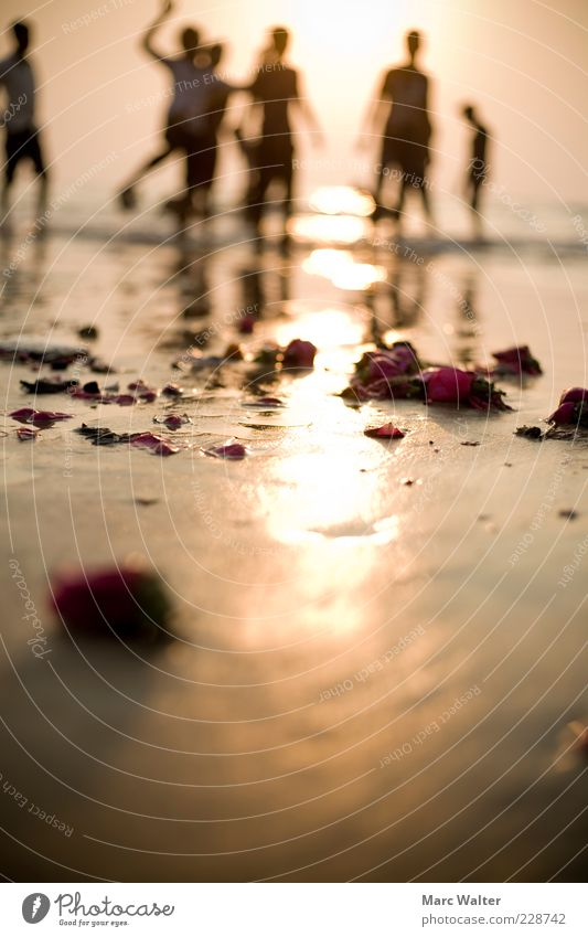 Human being Sun Flower Vacation & Travel Summer Ocean Beach Life Freedom Jump Happy Coast Group Feasts & Celebrations Dance Happiness