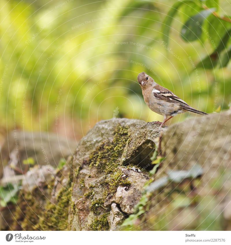 Nature Summer Green Environment Small Garden Brown Bird Wild Park Cute Observe Curiosity Watchfulness Interest Attentive