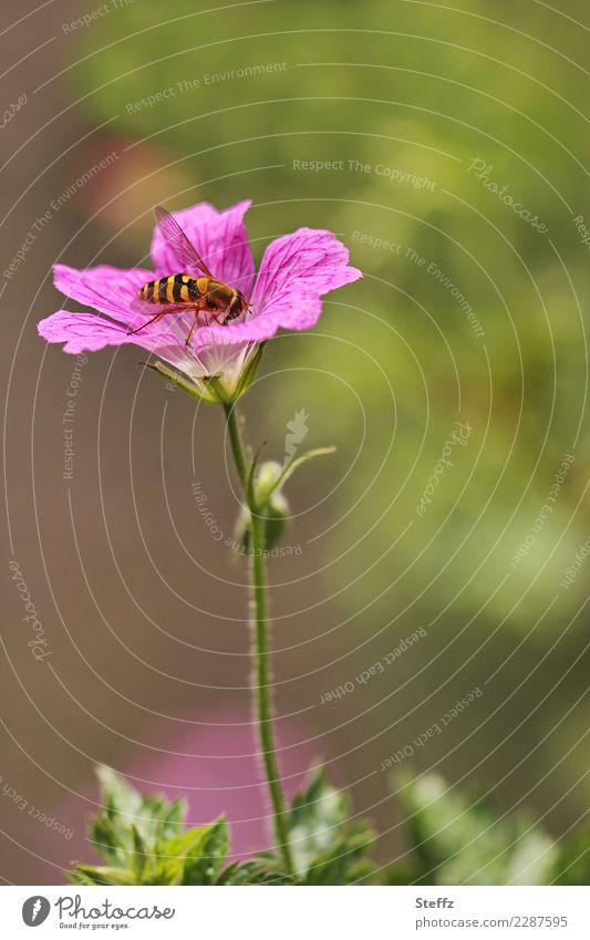 Nature Plant Summer Beautiful Green Flower Animal Calm Environment Blossom Small Garden Pink Park Idyll Fly