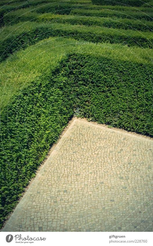 Plant Lanes & trails Arrangement Target Curiosity Cobblestones Distress Captured Paving stone Puzzle Endurance Horticulture Maze Hedge Foliage plant