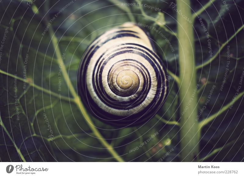 House in the green Nature Plant Leaf Snail 1 Animal Round Contentment Design Protection Pattern Line Snail shell Spiral Circle Colour photo Polaroid Light