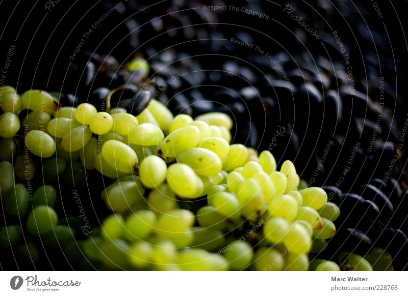 Nature Green Black Food Healthy Fruit Sweet Many Healthy Eating Delicious Organic produce Vitamin Juicy Berries Heap Goods