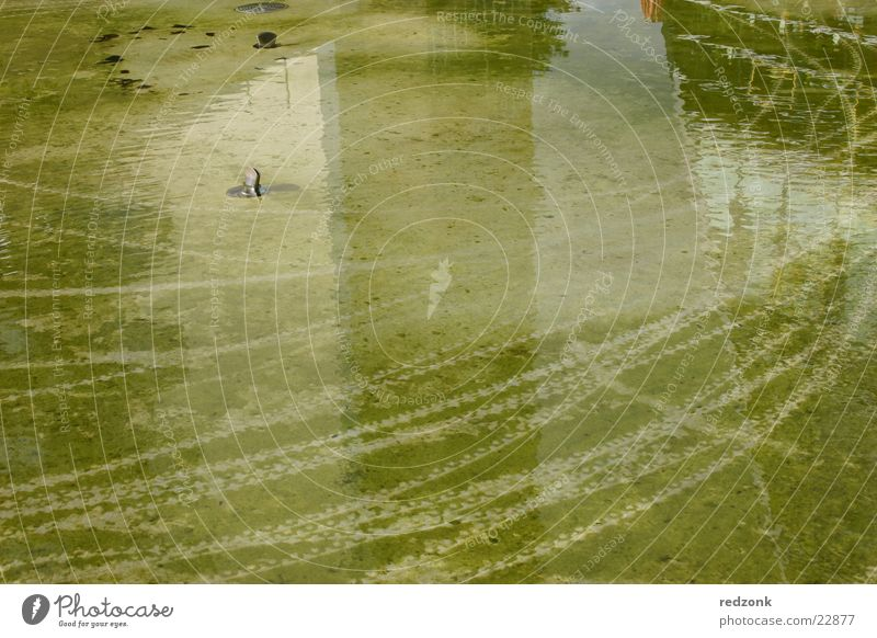 Water Green Ground Tracks Well Obscure Mature Pond Algae Chemnitz Saxony Imprint Skid marks