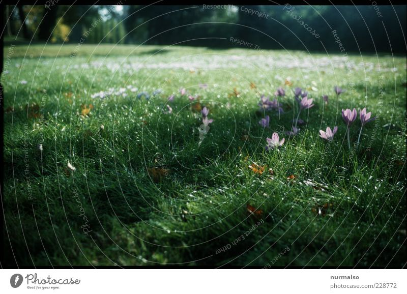 Nature Beautiful Plant Flower Animal Meadow Environment Landscape Grass Spring Moody Park Wet Fresh Happiness Growth