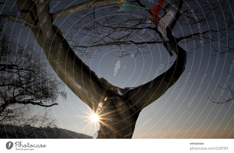 Y 2 Nature Landscape Plant Sky Sun Winter Climate Beautiful weather Tree Sign Exceptional Blue Tibet Flag Prayer flags Solar Power Lens flare Tree trunk Branch