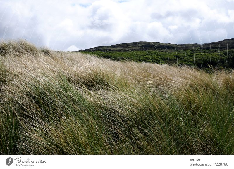 Nature Green Plant Loneliness Far-off places Landscape Grass Brown Contentment Wind Hill Beach dune Blade of grass Clouds in the sky Marram grass