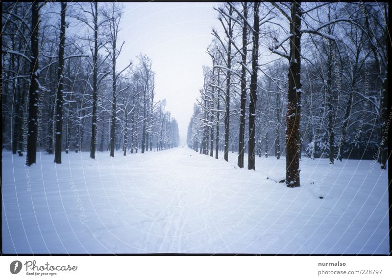 Nature Winter Far-off places Forest Relaxation Snow Environment Landscape Lanes & trails Ice Going Gloomy Frost Wellness Target Tree trunk