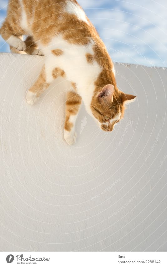 Cat Sky Wall (building) Observe Caution Downward