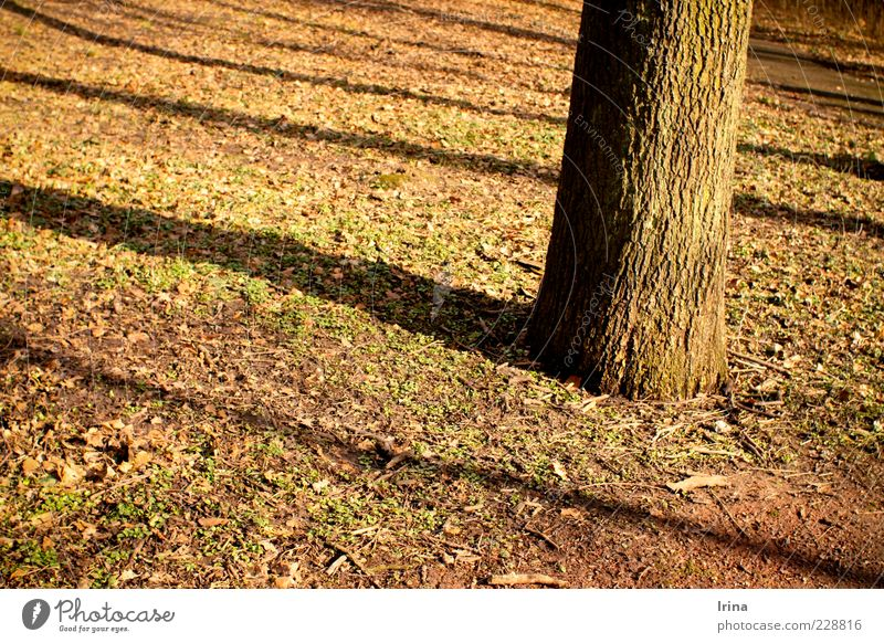 reverberation of shadows Relaxation Beautiful weather Tree Leaf Park Bochum Evening Shadow Contrast Sunlight Exterior shot Autumn leaves Tree trunk Tree bark