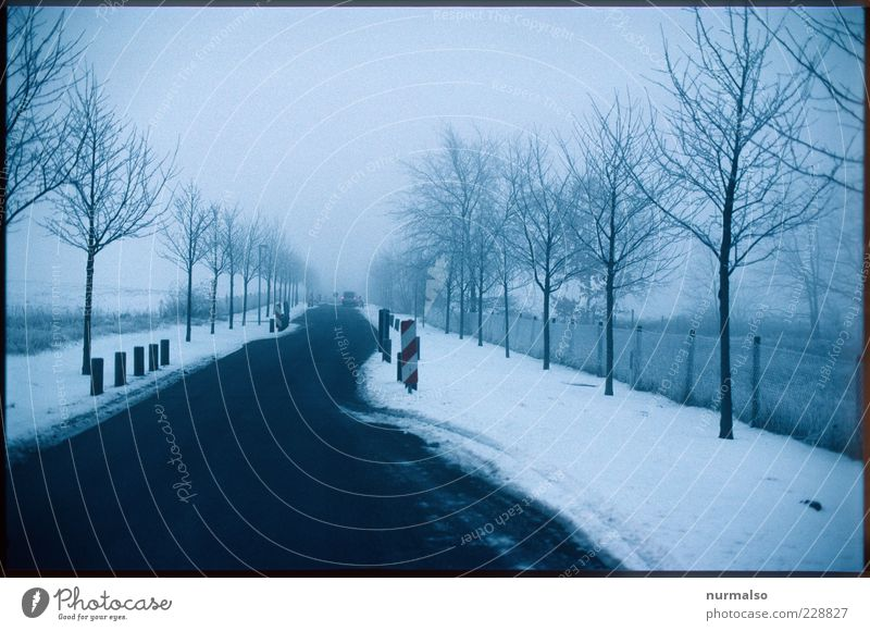 newer ending Environment Nature Plant Winter Bad weather Ice Frost Snow Traffic infrastructure Street Signage Warning sign Road sign Authentic Dark