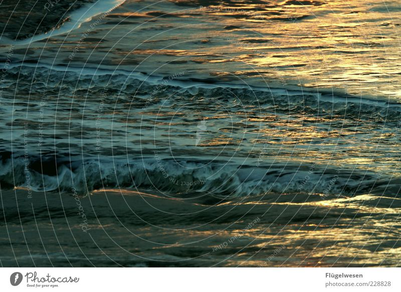 inverted world Vacation & Travel Tourism Trip Summer Summer vacation Ocean Waves Exotic Water Swell Crest of the wave Colour photo Exterior shot Twilight Light