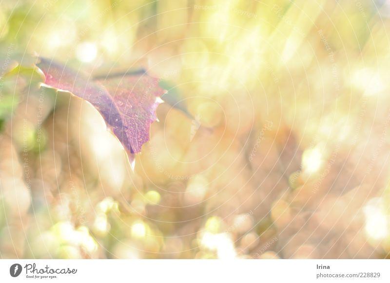 Plant Leaf Colour Spring Spring fever Reflection Vine leaf