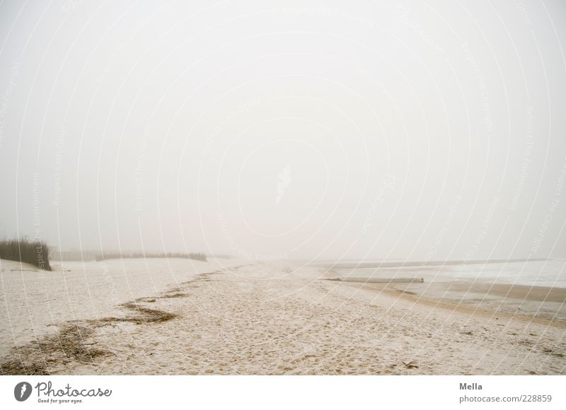 Nature Ocean Beach Calm Loneliness Far-off places Environment Landscape Gray Sand Coast Moody Bright Fog Natural Climate
