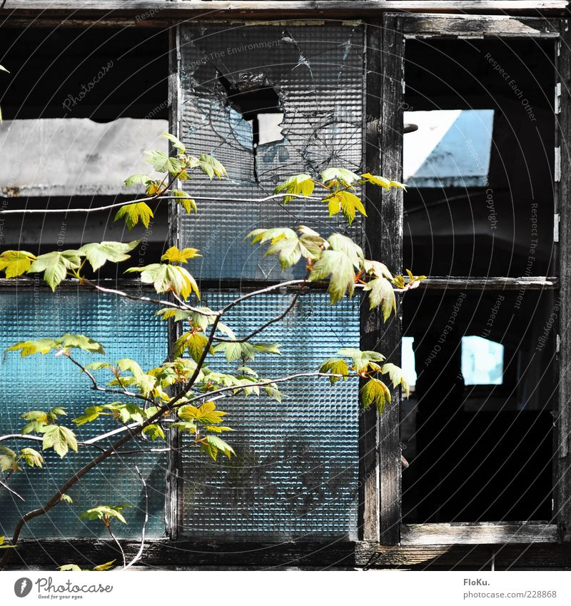 Old Blue Green Plant Leaf Black Environment Dirty Broken Transience Factory Decline Ruin Fear of the future Twig Destruction