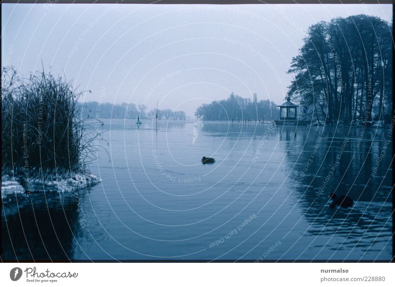 cold Havel Environment Nature Landscape Plant Animal Elements Water Winter Ice Frost River bank Bay Caputh Wild animal Bird Freeze Cold Natural Gloomy Dawn