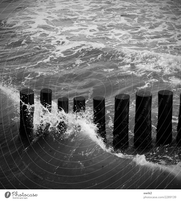 crest of a wave Water Waves Coast Baltic Sea Break water Wooden stake Touch Movement Dark Simple Firm Together Maritime Wet Dependability Patient Endurance
