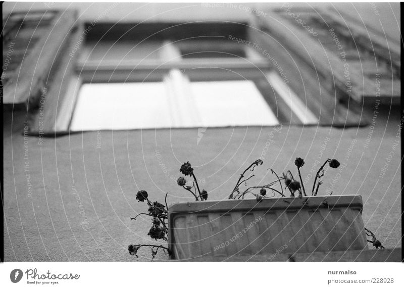 Window with view Living or residing House (Residential Structure) Environment Flower Facade Hang Faded Climate Stagnating Window box Black & white photo