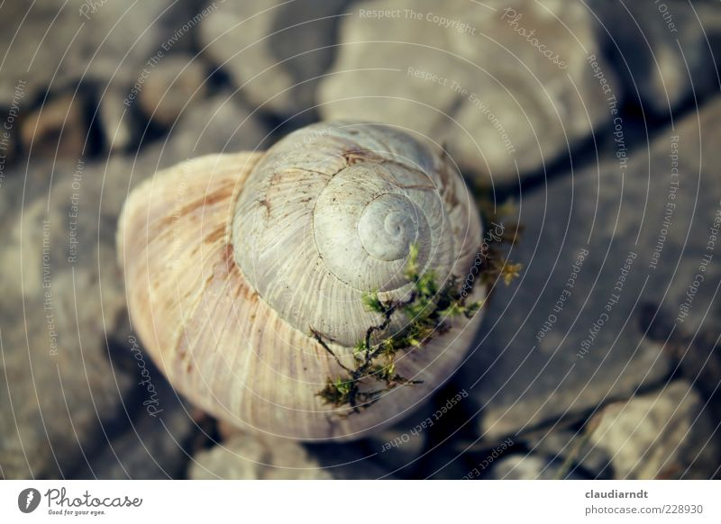home Environment Nature Animal Moss Snail 1 Slimy Gray Snail shell Stone Spiral Loneliness Hiding place Calm Inhabited Subdued colour Close-up Detail Deserted