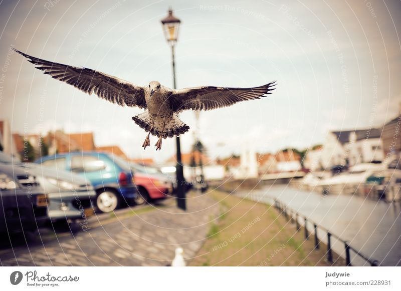 low-flying aircraft Beautiful weather River bank Means of transport Lanes & trails Car Animal Bird Wing Seagull Street lighting Flying Infinity Natural Power
