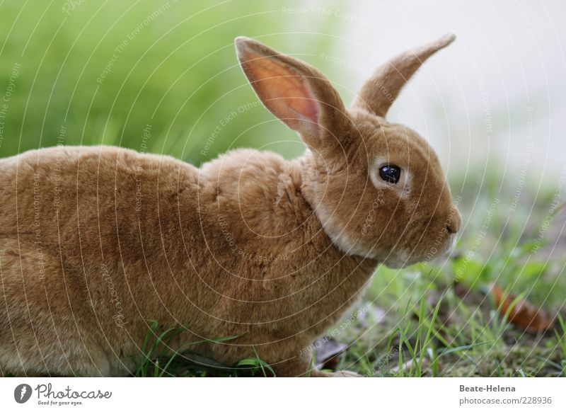 Nature Beautiful Animal Eyes Meadow Head Grass Spring Brown Esthetic Wild animal Observe Animal face Easter Pelt