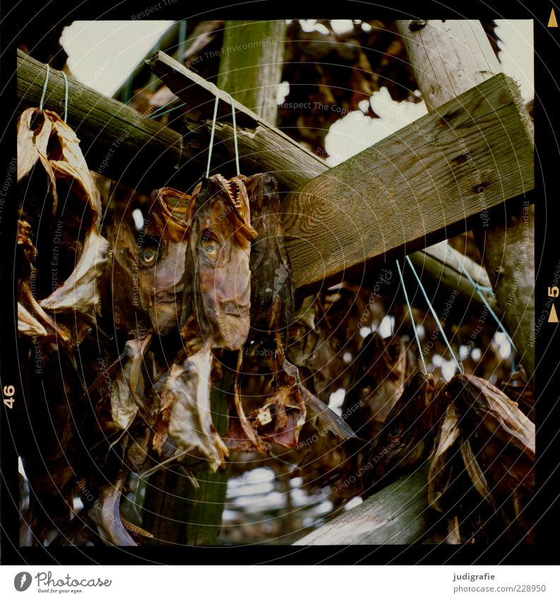 Eyes Dark Nutrition Death Wood Food Moody Brown Fish Many Dry String Hang up Scaffolding Suspended