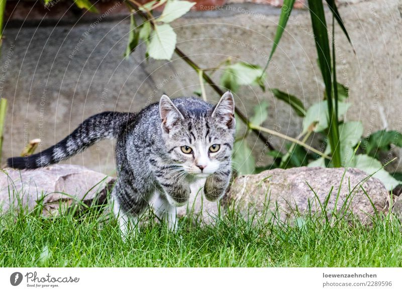 offensive Environment Nature Animal Grass Garden Pet Cat 1 Baby animal Stone Observe Discover Catch Flying Hunting Playing Athletic Success Natural Power